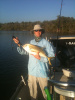 The hard fighting Jack Crevalle